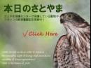 【寄稿】人間と野生動物との共存を目指して-NPO法人ジャパンワイルドライフセンター・飯吉茜さん
